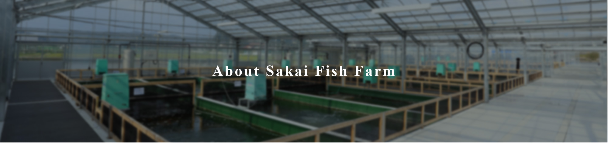 About Sakai Fish Farm